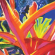Sylvia Ditchburn, Tropical Garden with Crab Claw. Acrylic on canvas, 61 x 45cm.